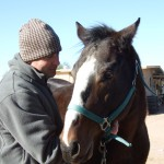 Equine Therapy-Wellness In Motion